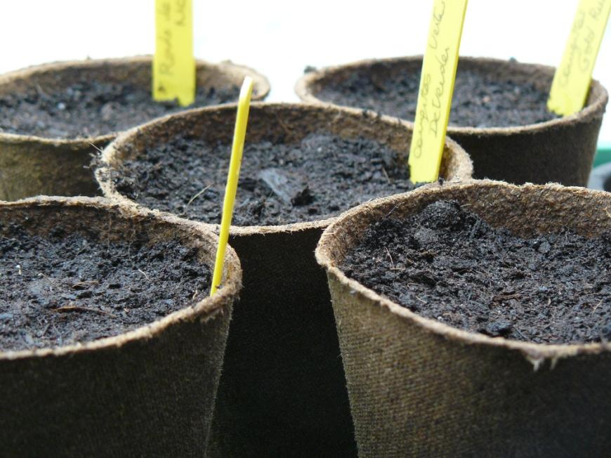 semis avec étiquettes